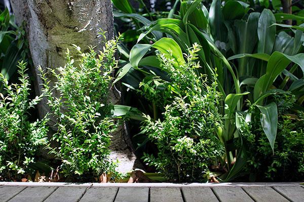 path-design-studios_hawthorn-garden_01