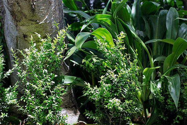 path-design-studio_-_landscape-design_garden-maintenance_home-link