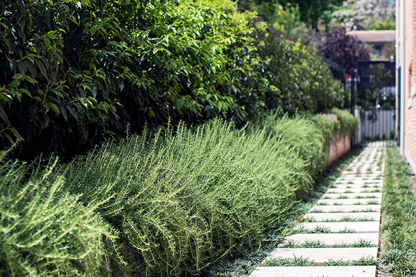 path-design-studio hawthorn-garden_landscape-construction_15_600x400