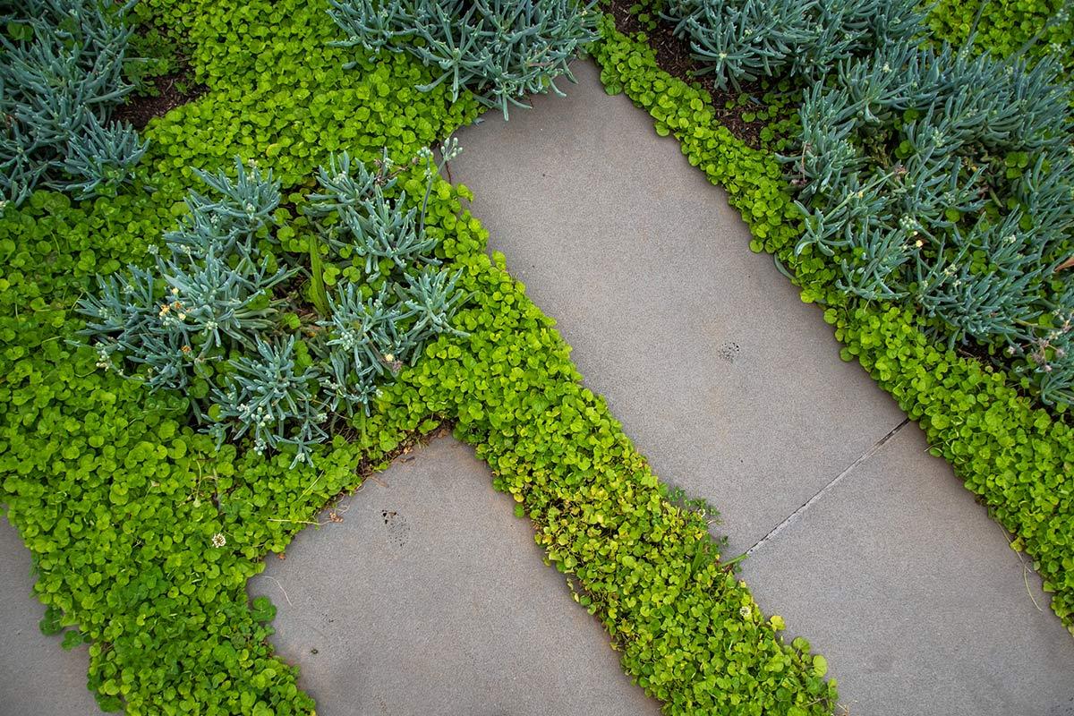path-design-studio_bentleigh-garden_landscape-design_09_1200x800