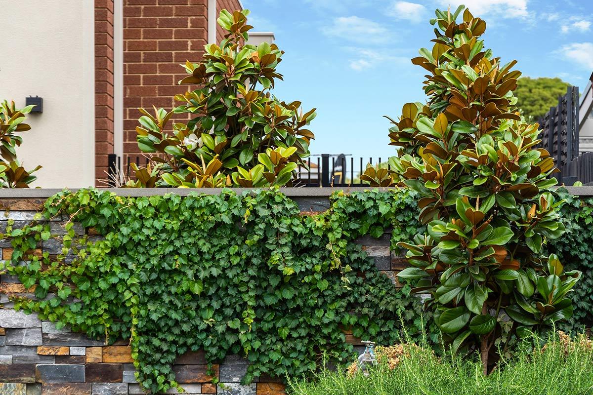 path-design-studio_bentleigh-garden_landscape-design_13_1200x800